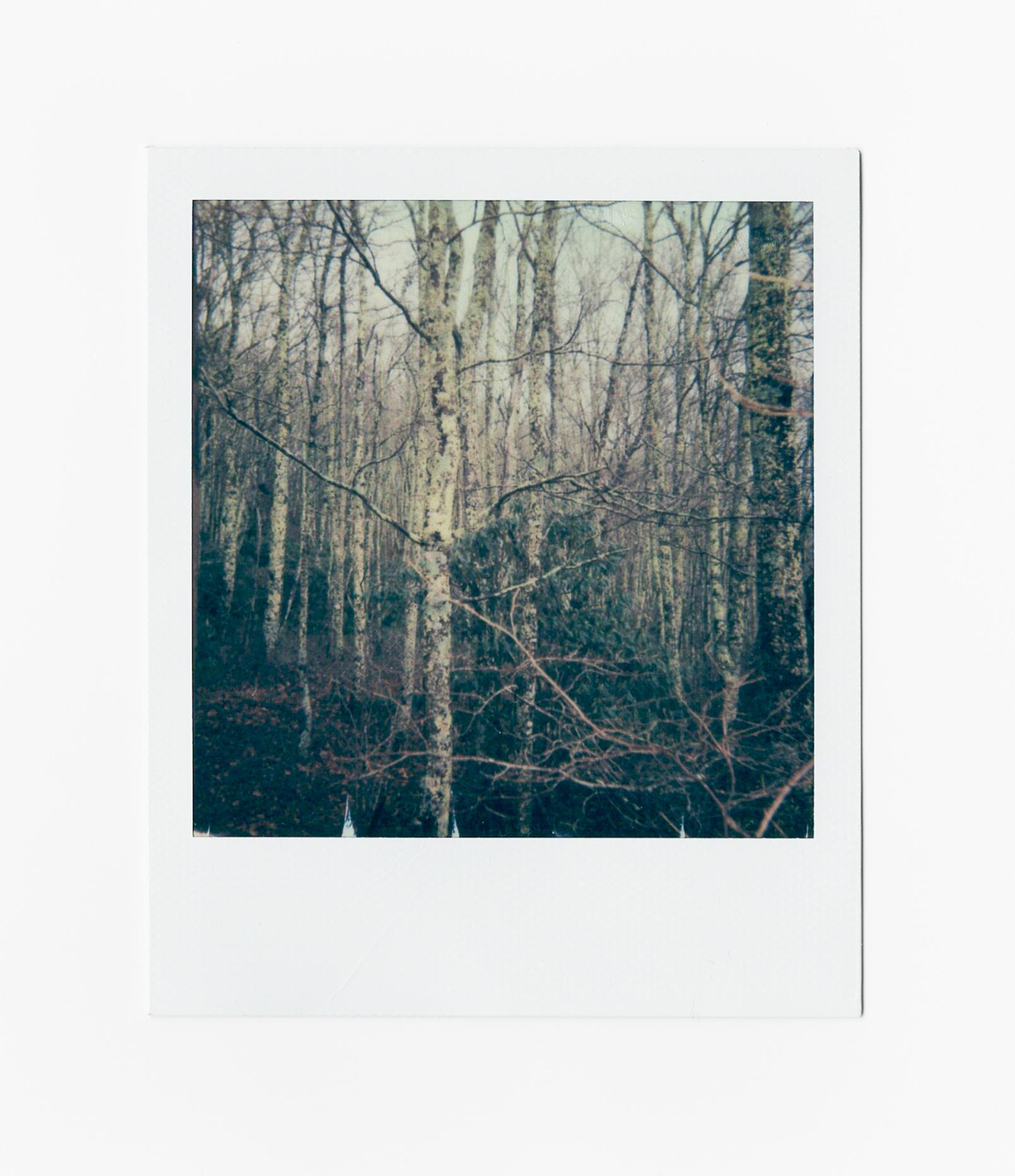xmas16_woods (1 of 1).jpg