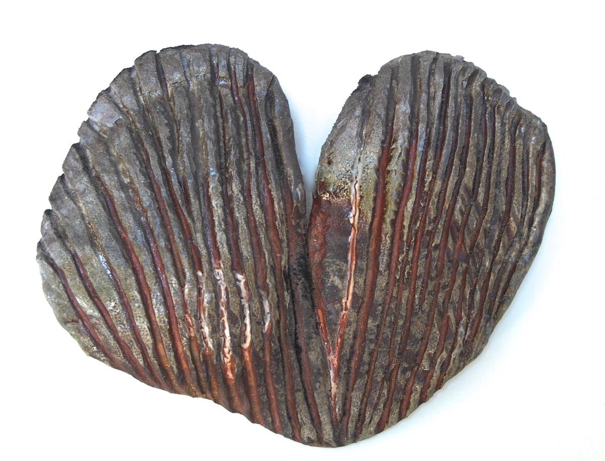Ribbed Cardial Mollusk
