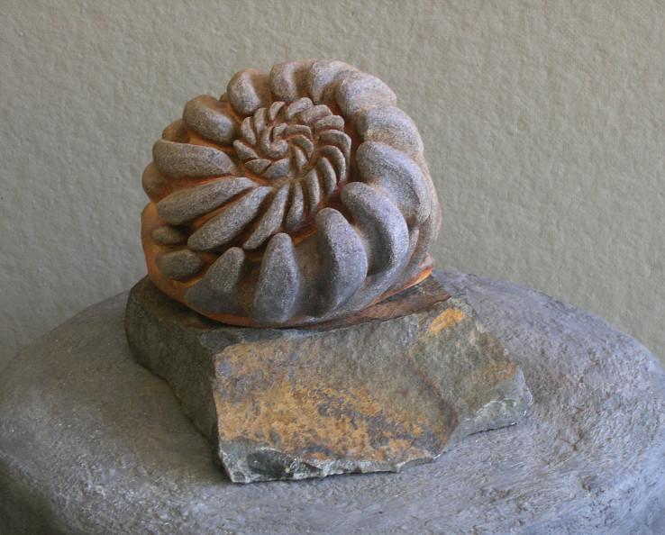 Ammonite Whorl