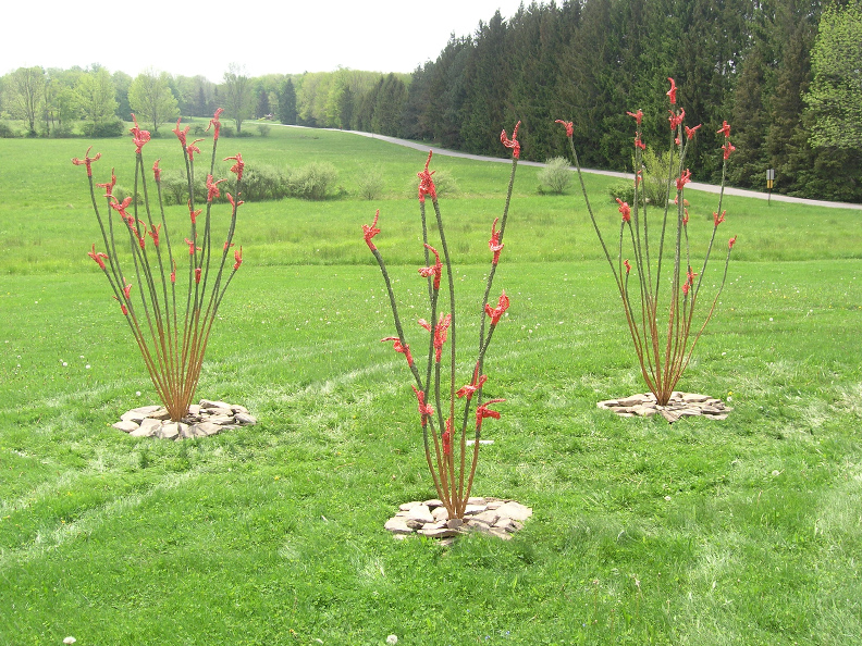 Ocotillo Patch  at the Himalayan Institute, Bethany, PA