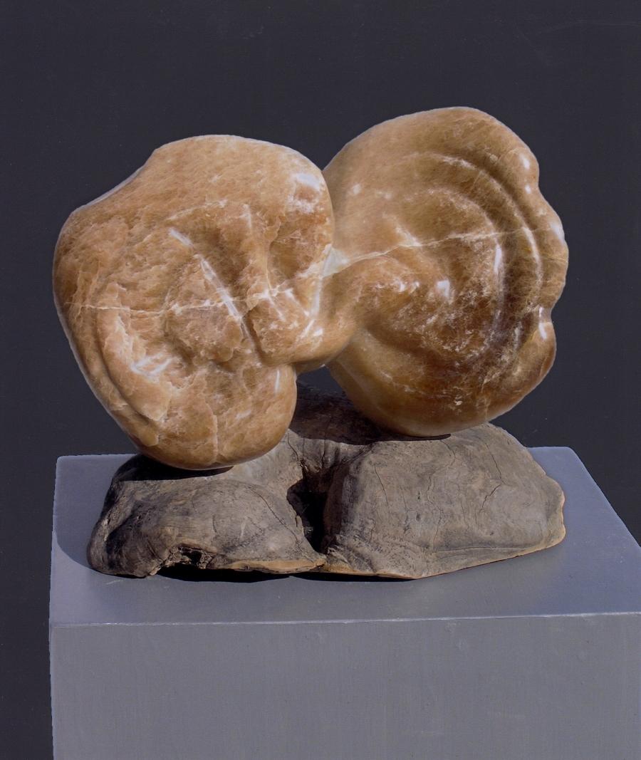 Costa Rican Double Fungi