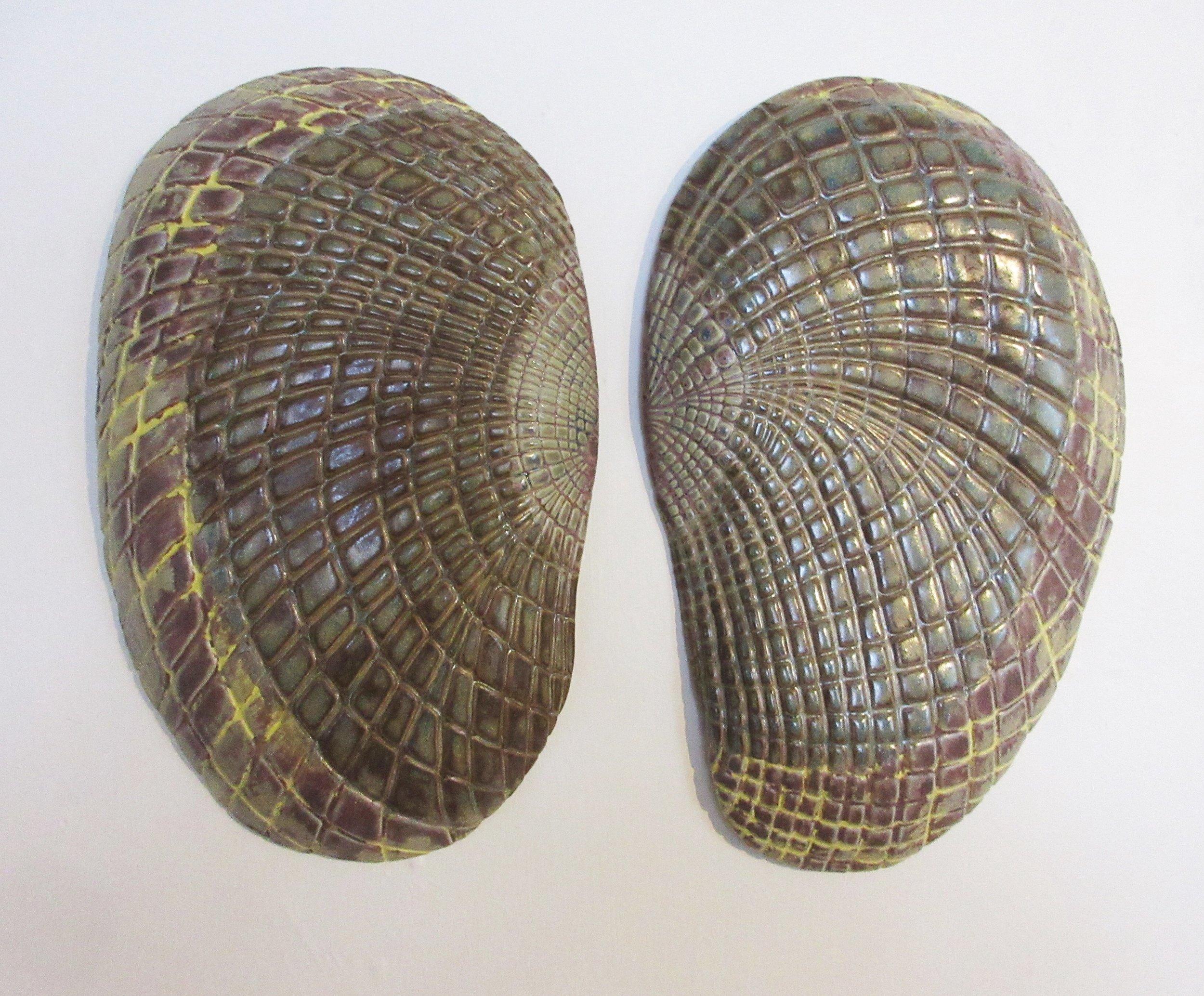Mussel shell Halves 2018