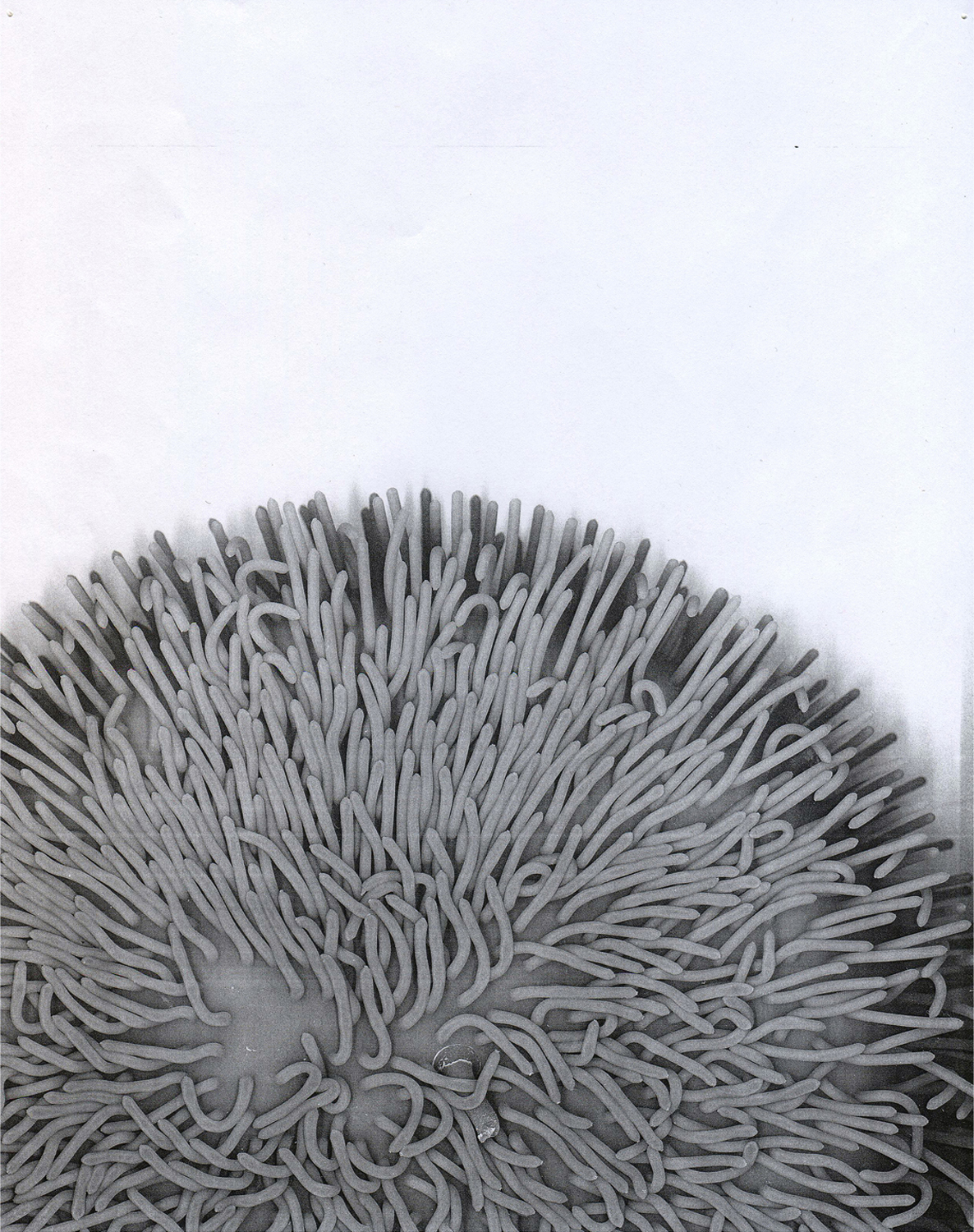 Xerox (Koosh) , 2015.  Digital print of a photocopy.  20 x 17 in.
