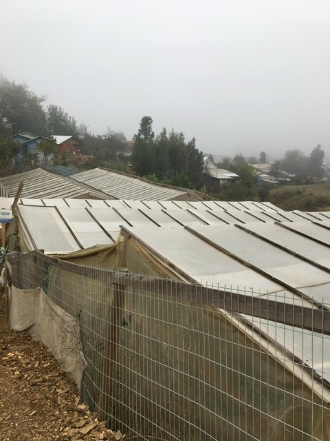 Greenhouses, Chile, May 2019. Photograph © Adrienne Callander