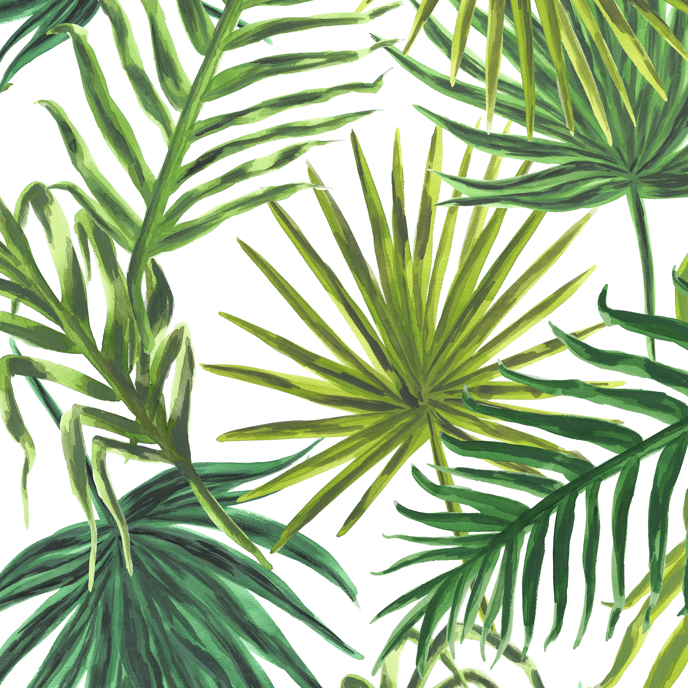 Palms in White  PALM SPRINGS COLLECTION