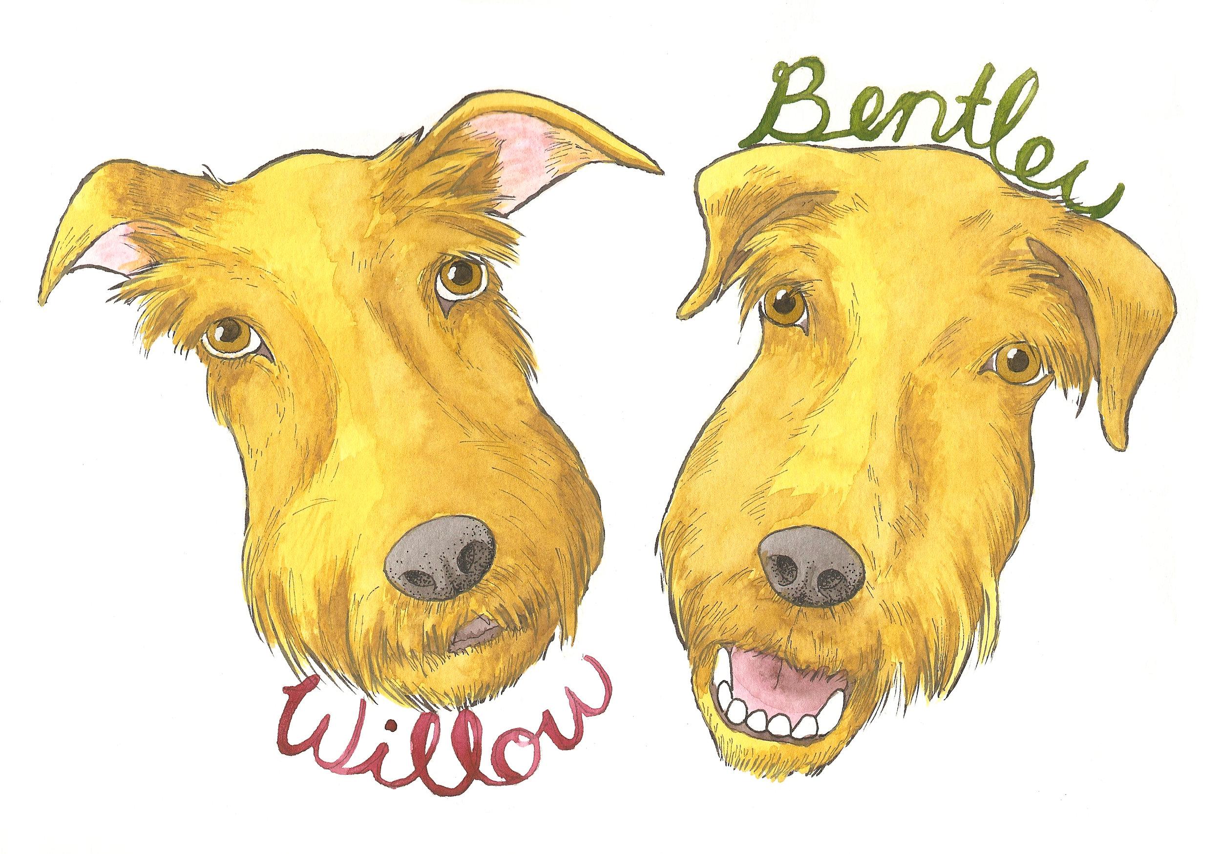 Willow and Bentley 2.jpg