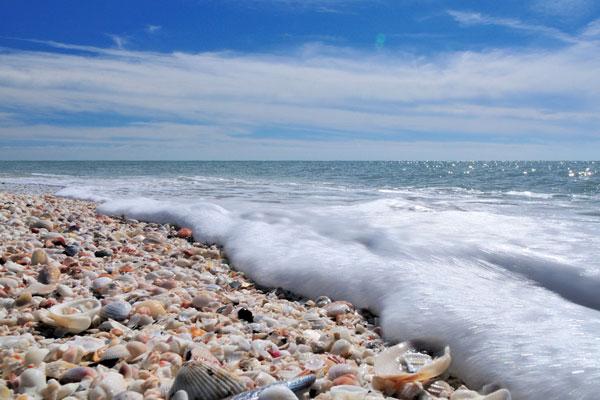 sanibel-island-beach-shelling.jpg