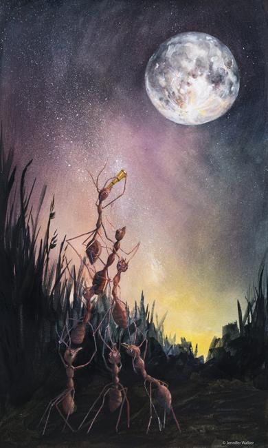 The-First-Astronomers-Jennifer-Walker.jpg