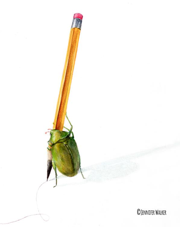 final-pencil-beetle-print.jpg