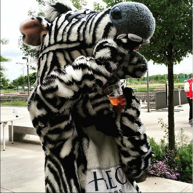 #15. Mr. Zebra takes a sip break.  (via  HECMBAT )