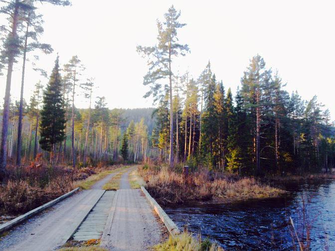 Mindaway forest.jpg