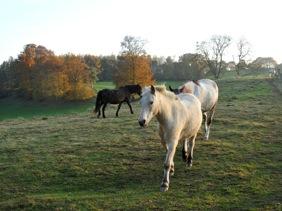 paarden3_herfst_pd.JPG