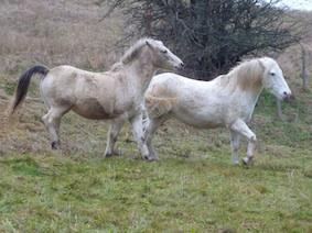 www_paarden2P1010964* kopie.jpg
