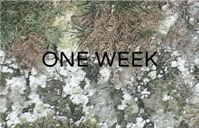 exiGrow week 2.png