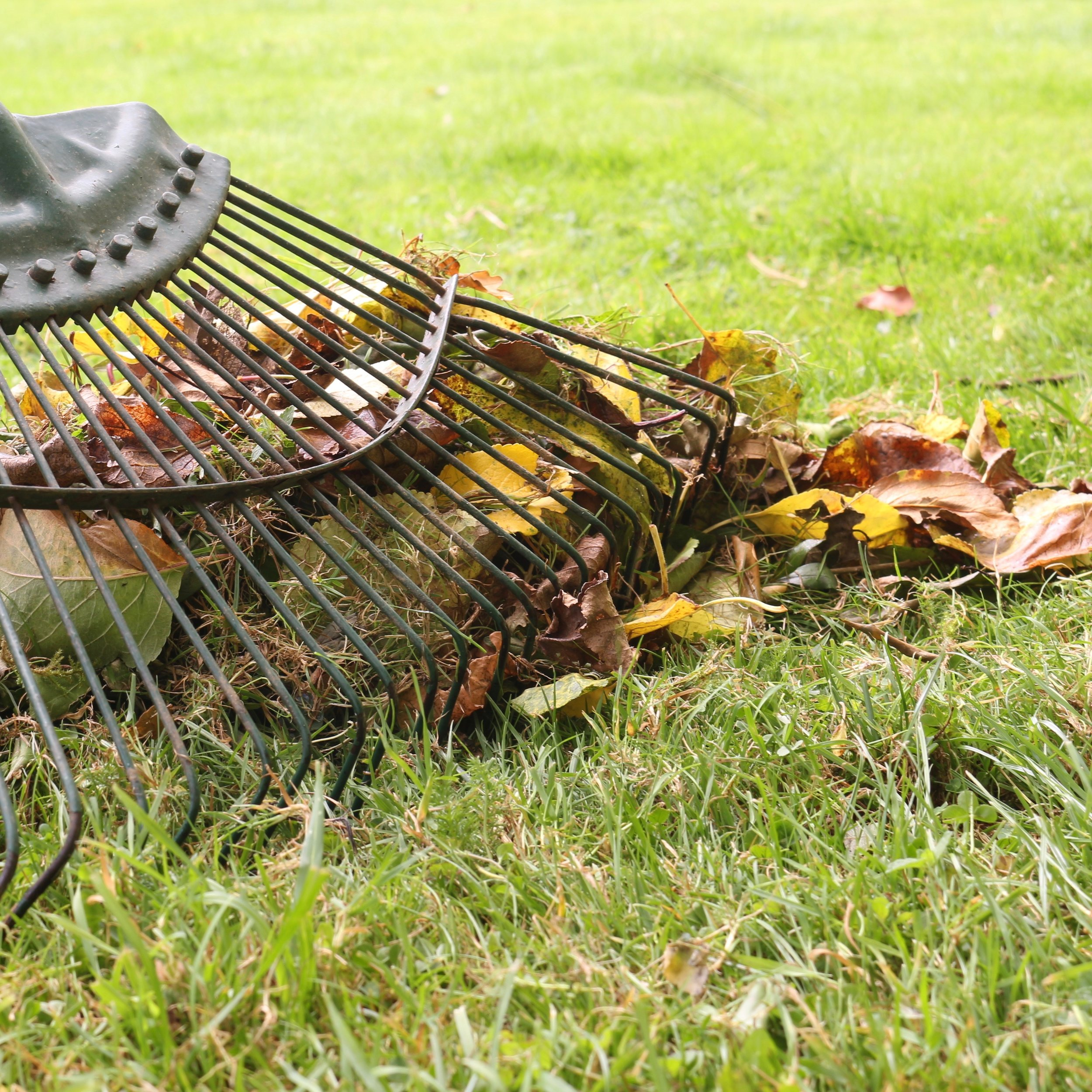 Spring clean. - Rake up leaves and debris (but wait until the ground is dry to avoid making the ground uneven).
