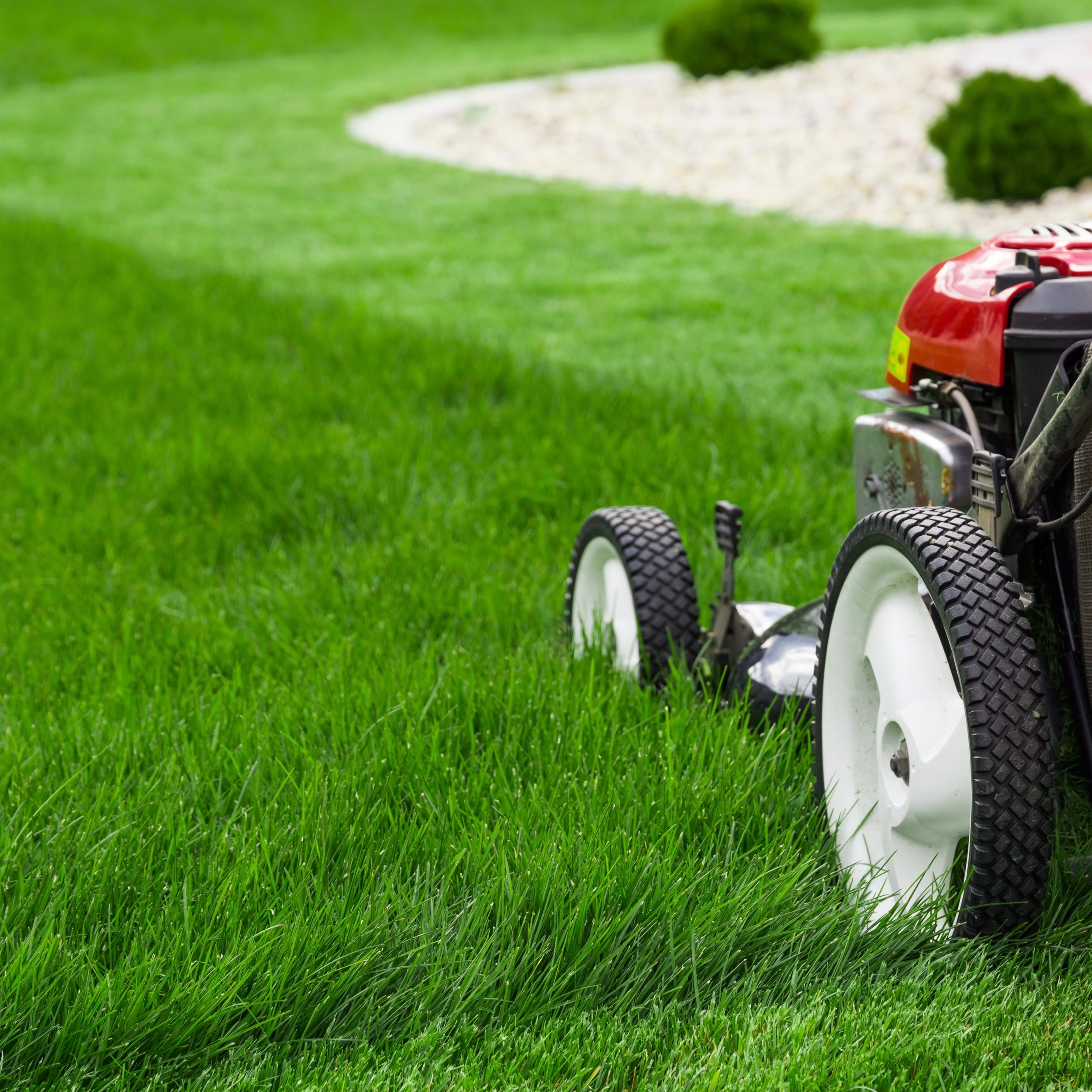 Just a bit off the top. - Give your lawn a trim — but only the top 1/3.