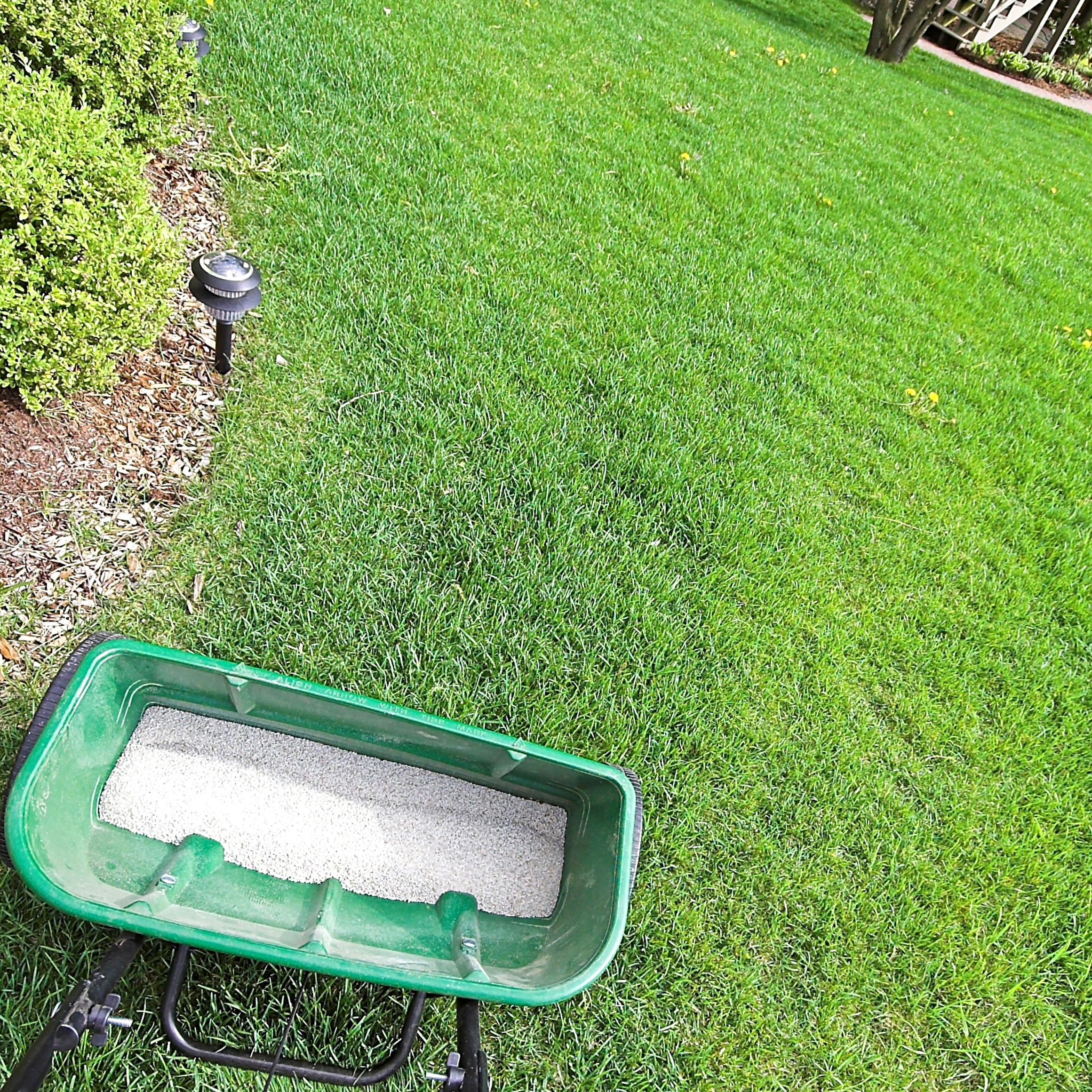 Feed the beast. - Apply slow-release fertilizers every 6-8 weeks beginning in late spring when the soil temperature is above 55°. Consider 20-5-10 (20% nitrogen, 5% phosphate, 10% potassium), but check with your local garden center for the proper mix for your area and grass type.