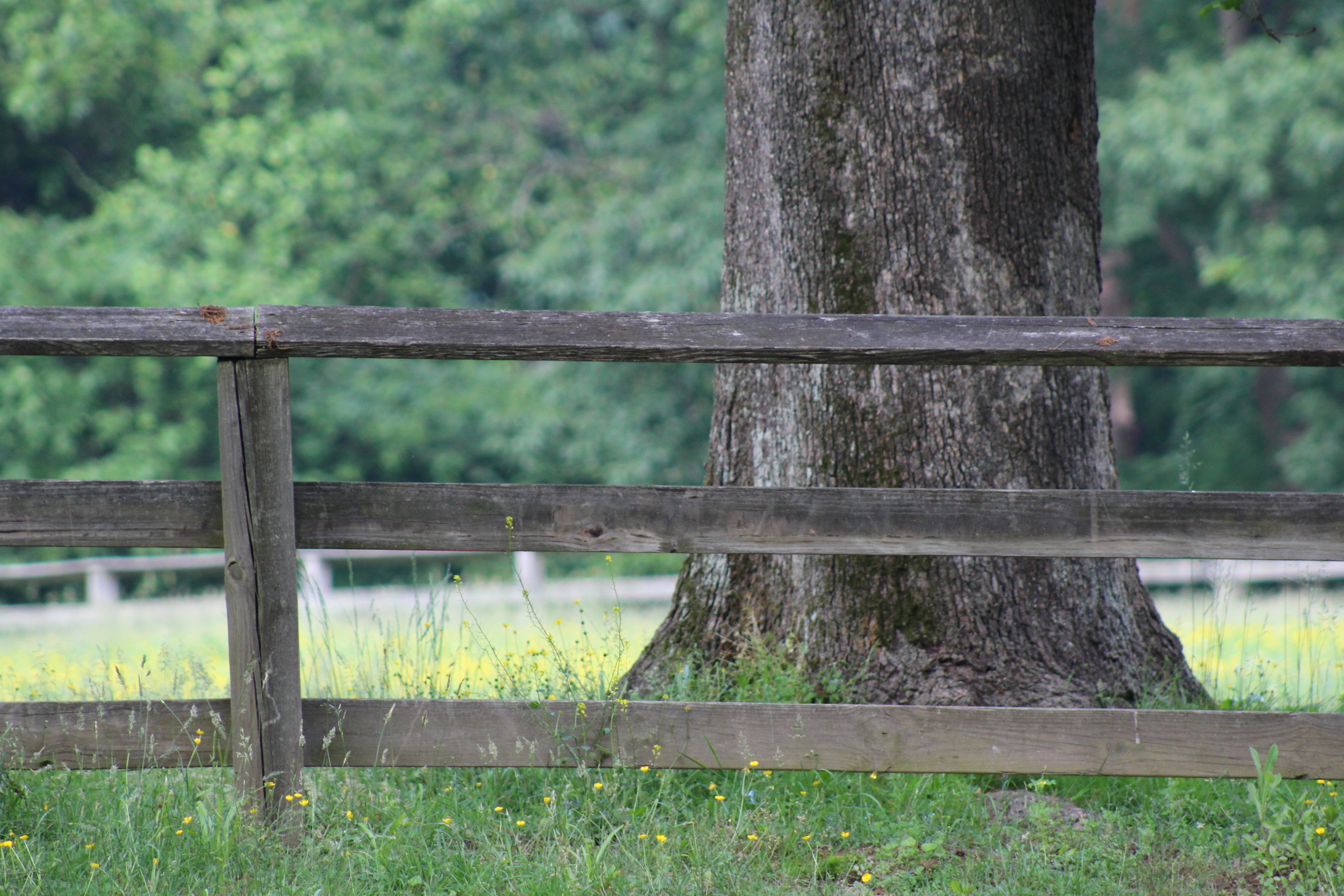 """Who knew  """"go in and out and find pasture""""  is a thing you can do in DC's Rock Creek Park?"""