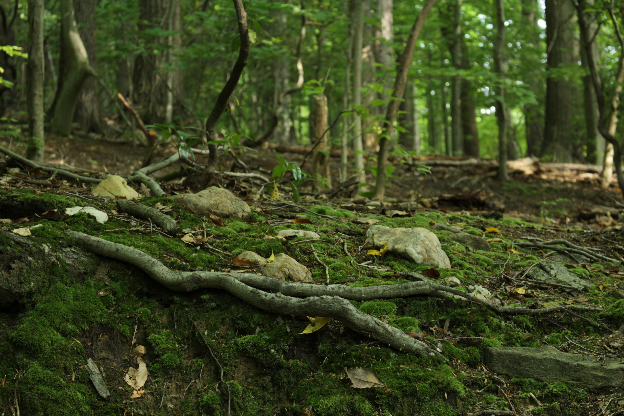 If stillness isn't on your agenda, Rock Creek Park is also a great place to get started trail running. Just look out for tree roots; sometimes they come out of the ground and trip you.