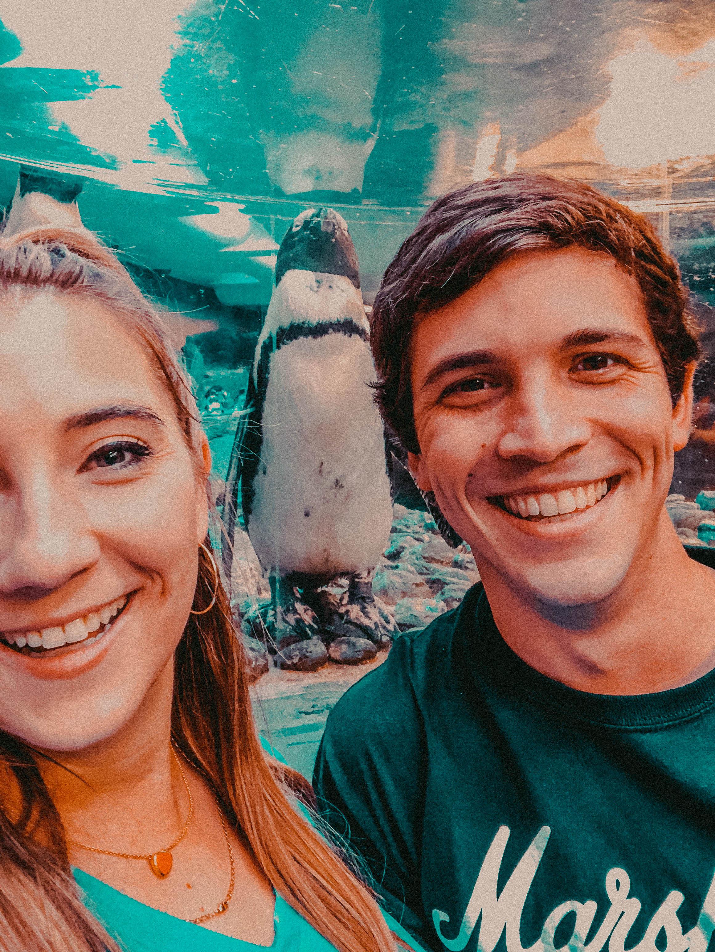 Penguins at the Georgia Aquarium | Things to Do in Atlanta | Jordan Hefler