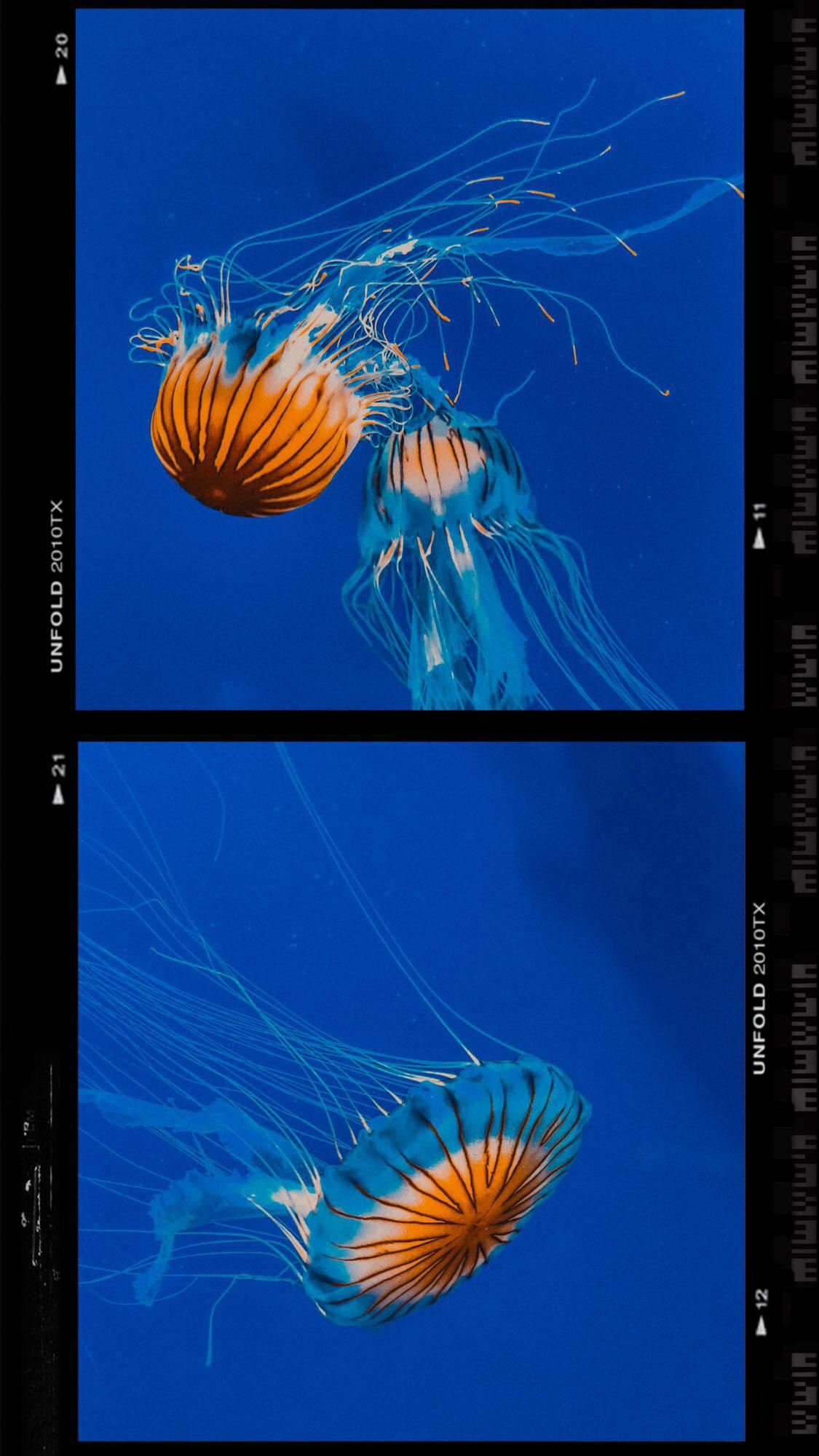 Jellyfish at the Georgia Aquarium | Things to Do in Atlanta | Jordan Hefler