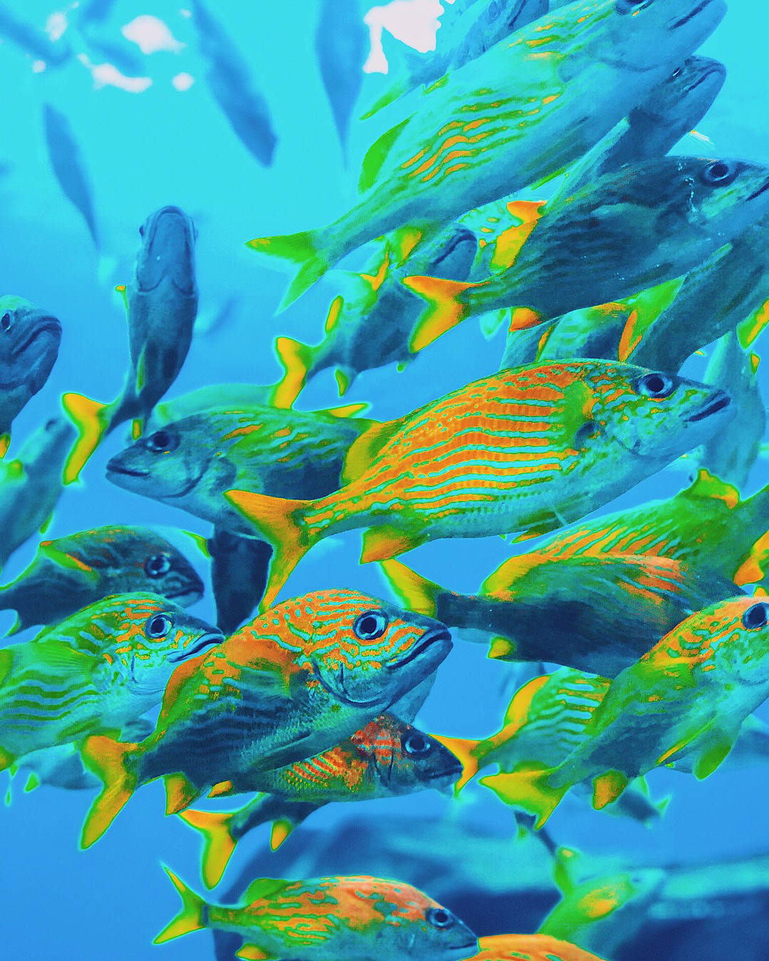 Georgia Aquarium | Things to Do in Atlanta | Jordan Hefler