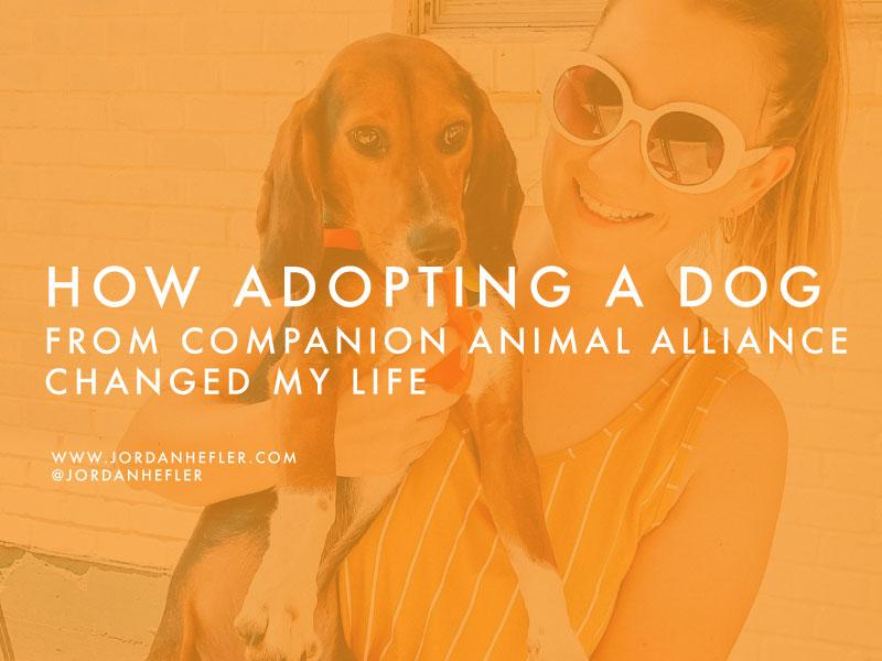 How Adopting a Dog From Companion Animal Alliance Changed My Life | Jordan Hefler