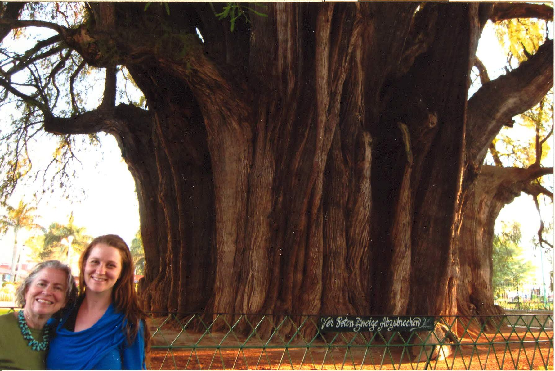 2013 - the same Tule tree with my daughter, Caitlin.