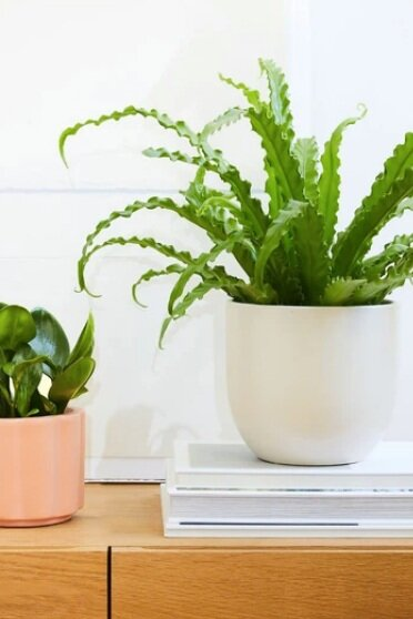 Sustainably Chic | Sustainable Fashion & Lifestyle Blog | The Best Gifts for Plant Lovers | Plant Subscription from The Sill.png