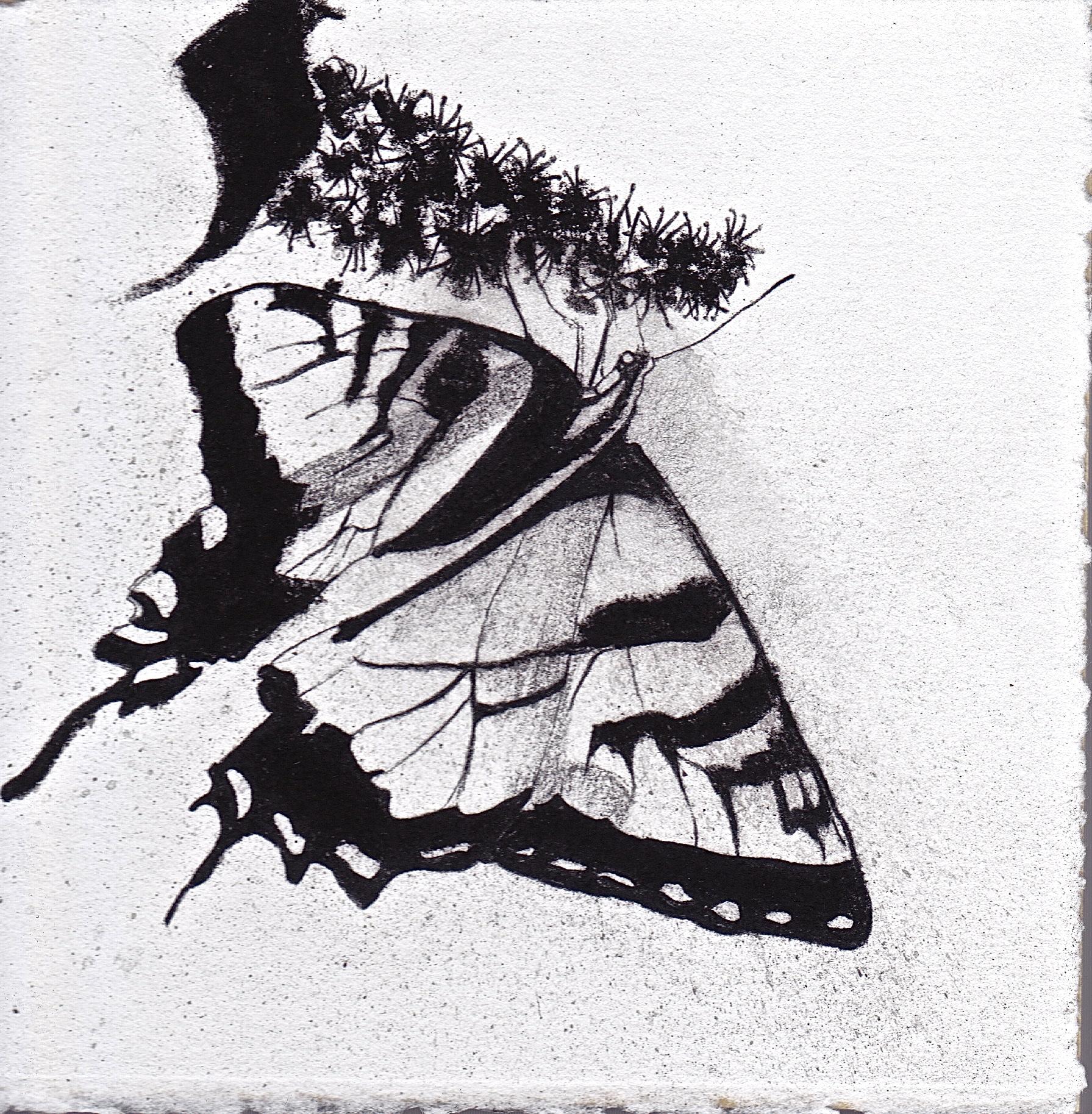 Tiger Swallowtail and Dark Cherry.jpeg