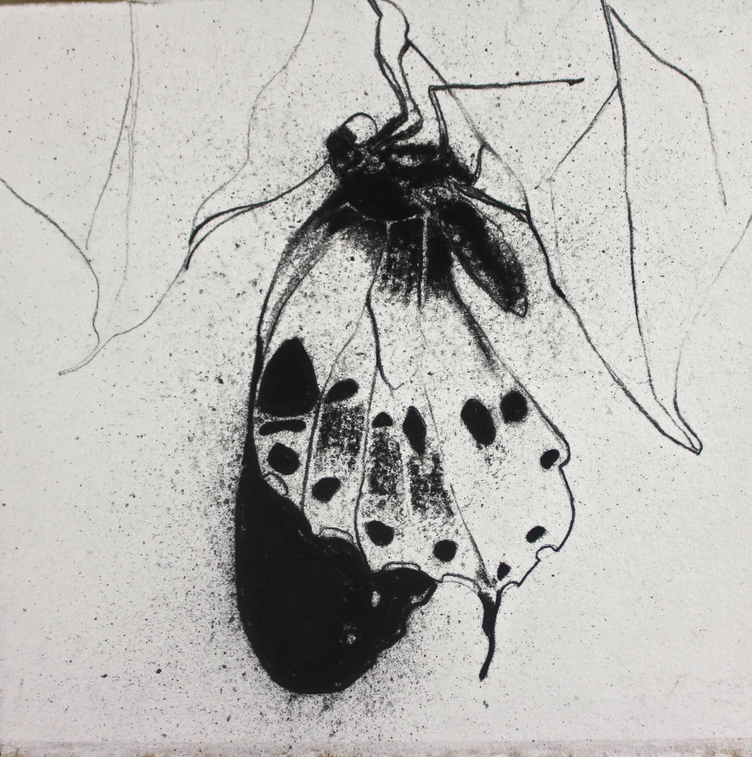 Palamedes Swallowtail Light.jpeg