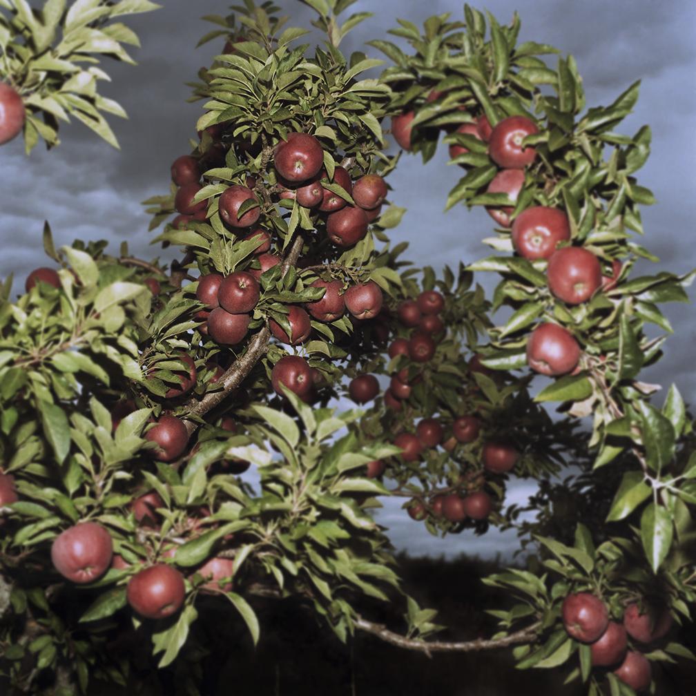 """Apples"", New York"