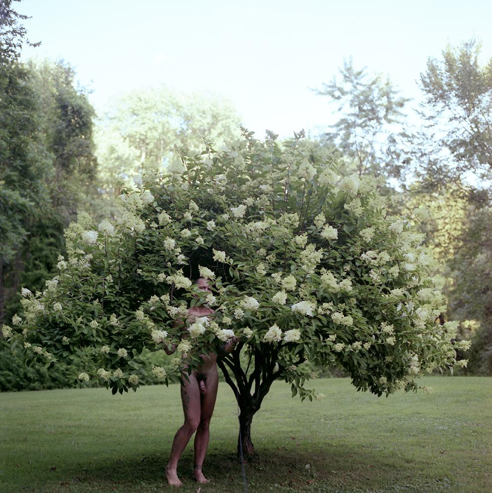 """""""Hydrangea"""", Rosendale, NY 2008"""