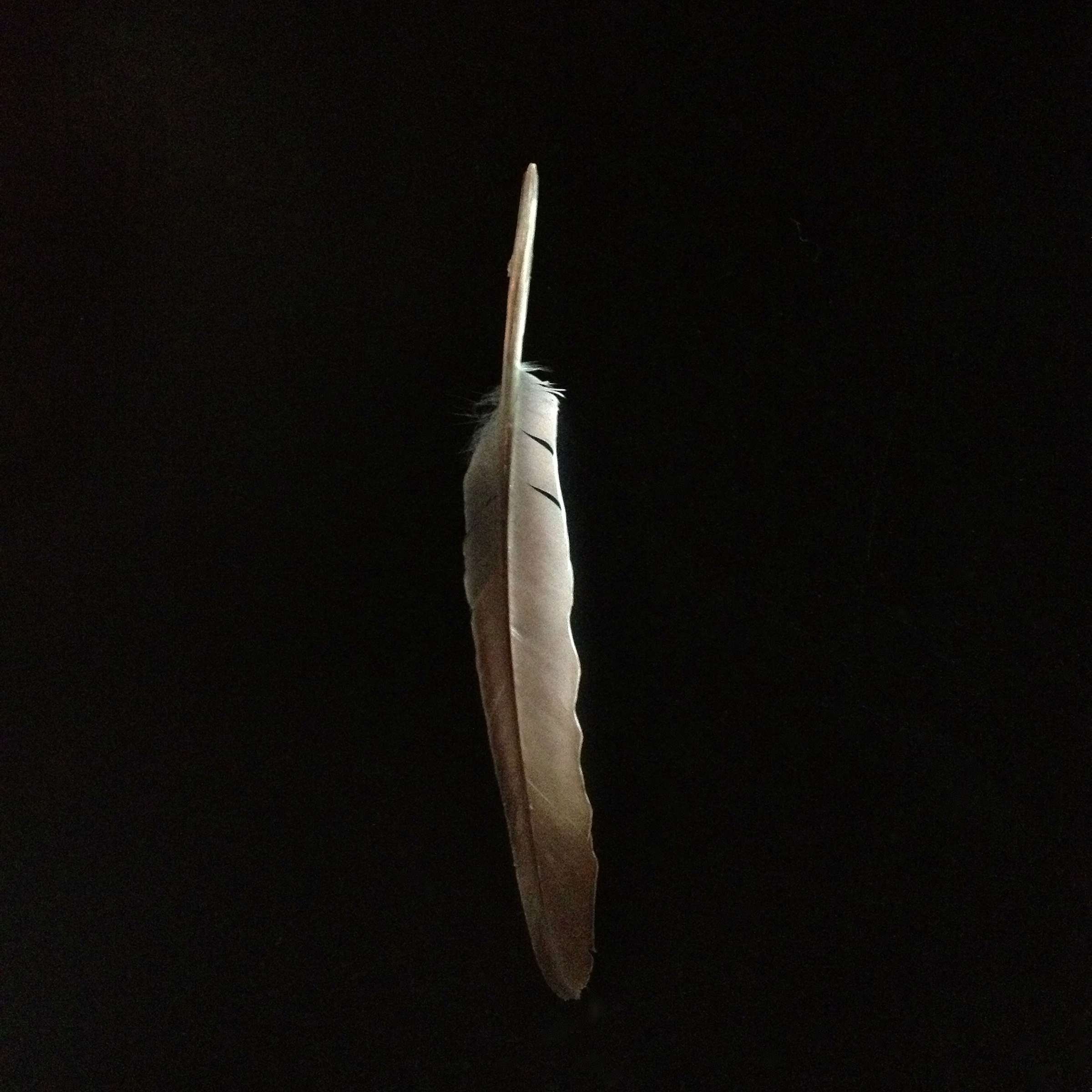 JOHN ARSENAULT_Feather.jpg