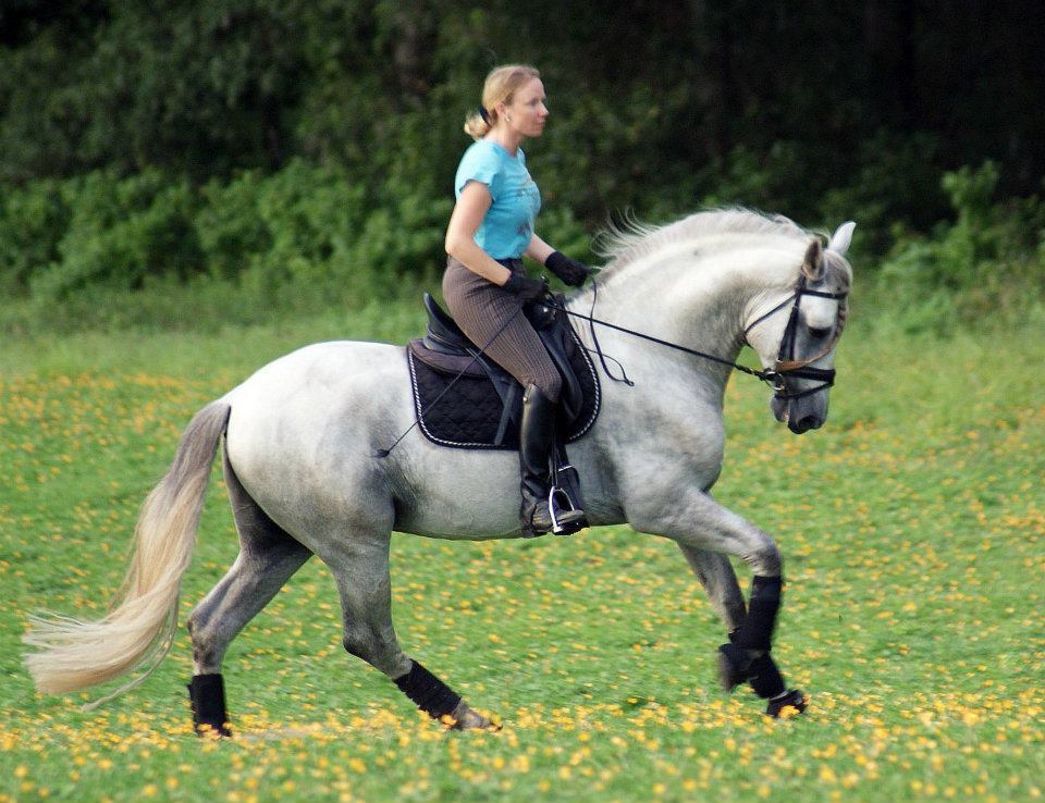 Iris Eppinger on her Andalusian stallion, Gani, in the field at Valhalla Farm