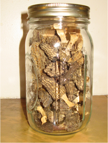 Dried  morels can be stored for years in air tight containers out of direct light.