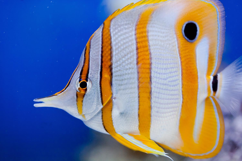 Long Beach Aquarium of the Pacific | Stephen Grant Photography