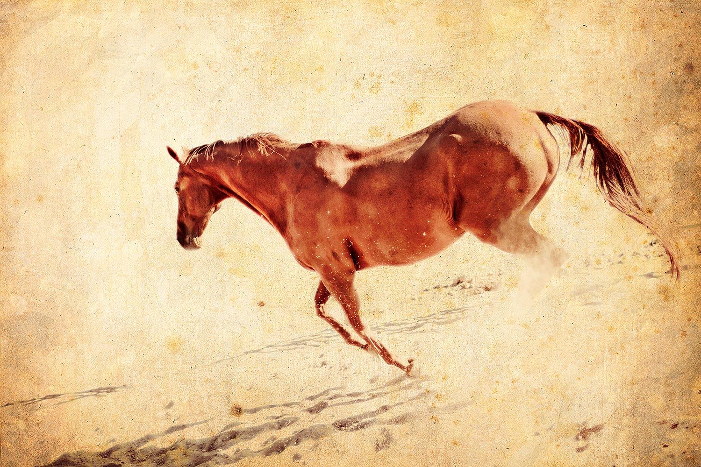 Equestrian Portraits   Stephen Grant Photography