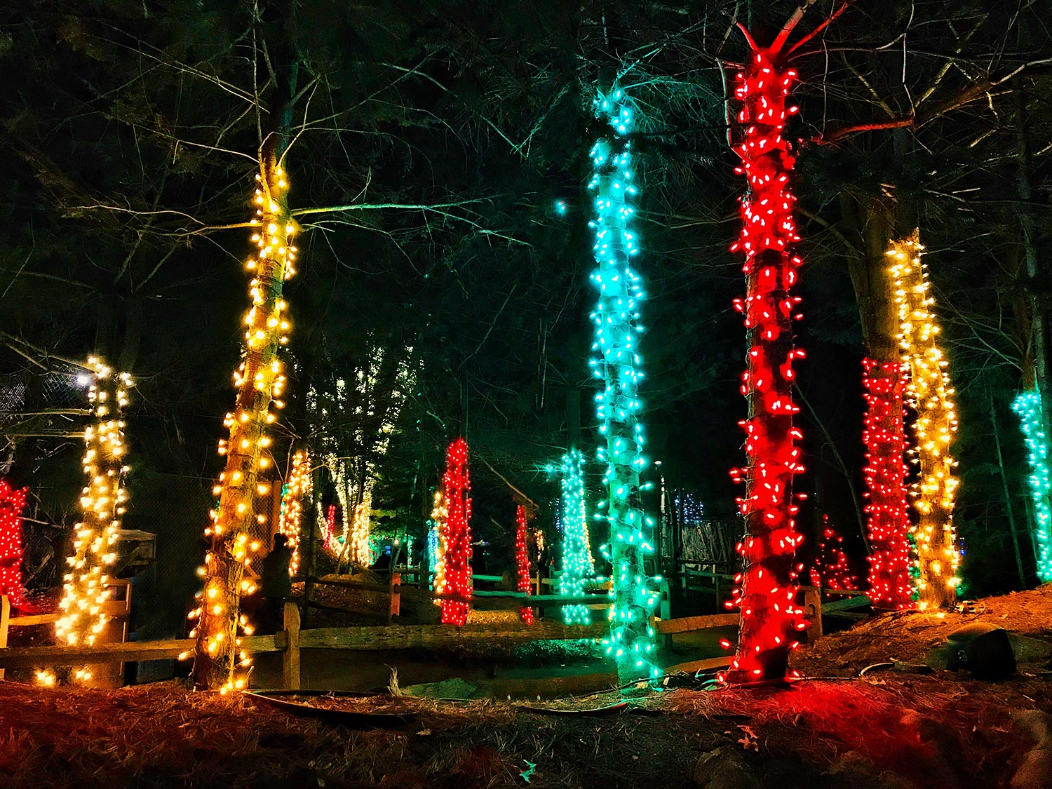 Stone Zoo Holiday ZooLights | Stephen Grant Photography