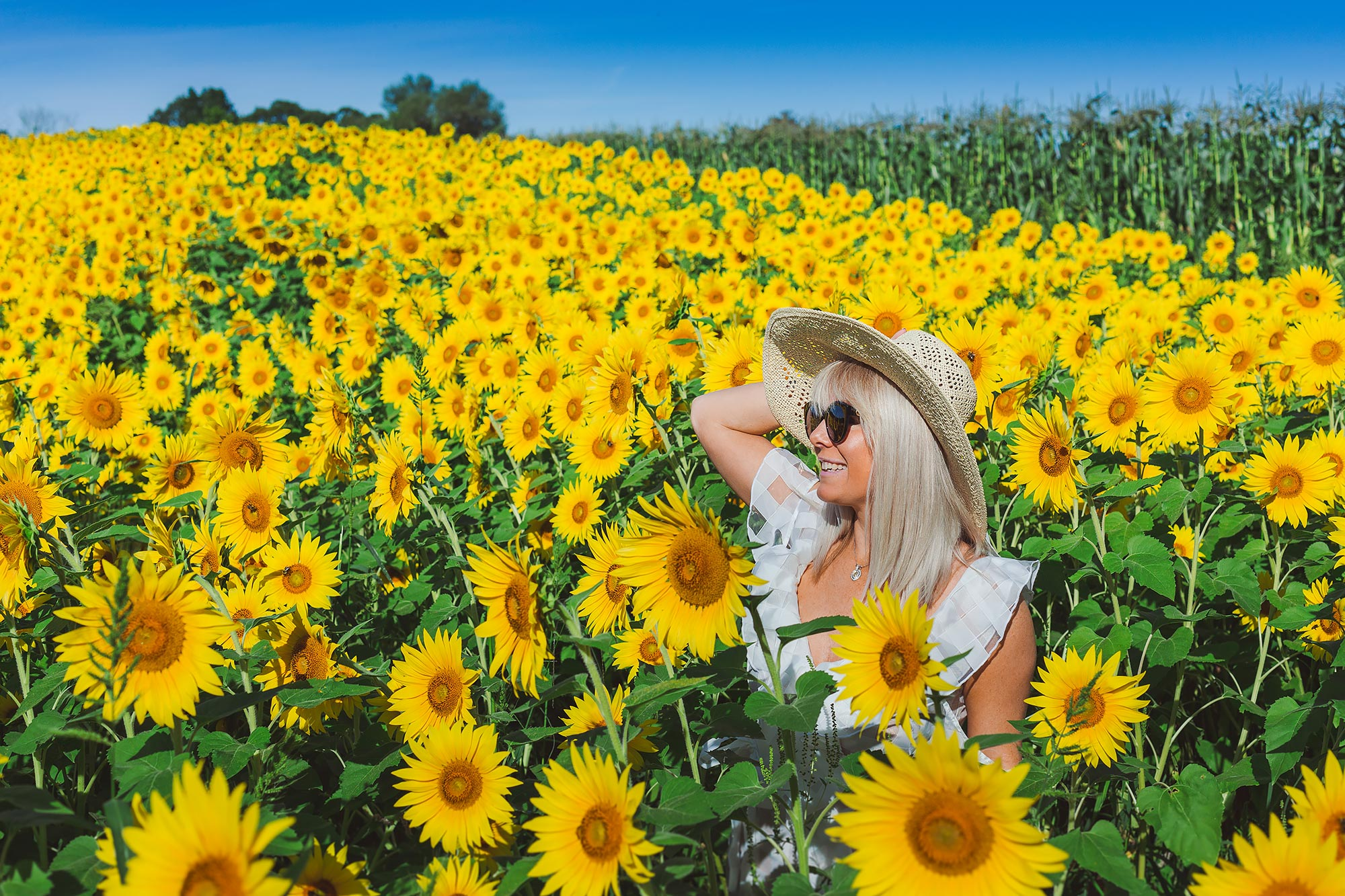 colby-farm-sunflowers-portrait-stephen-grant-photography.jpg