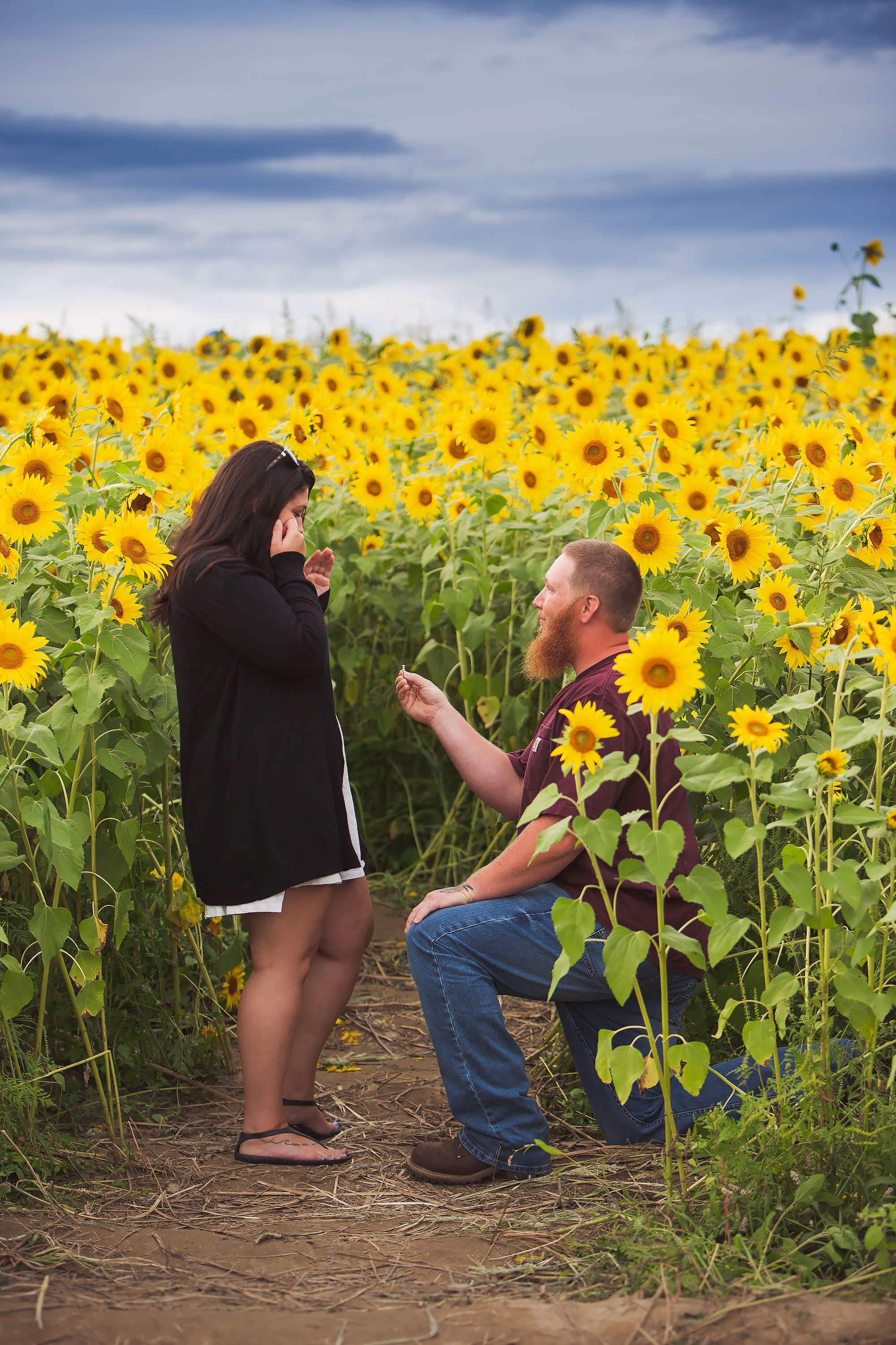 Colby Farm Sunflower Engagement | Stephen Grant Photography