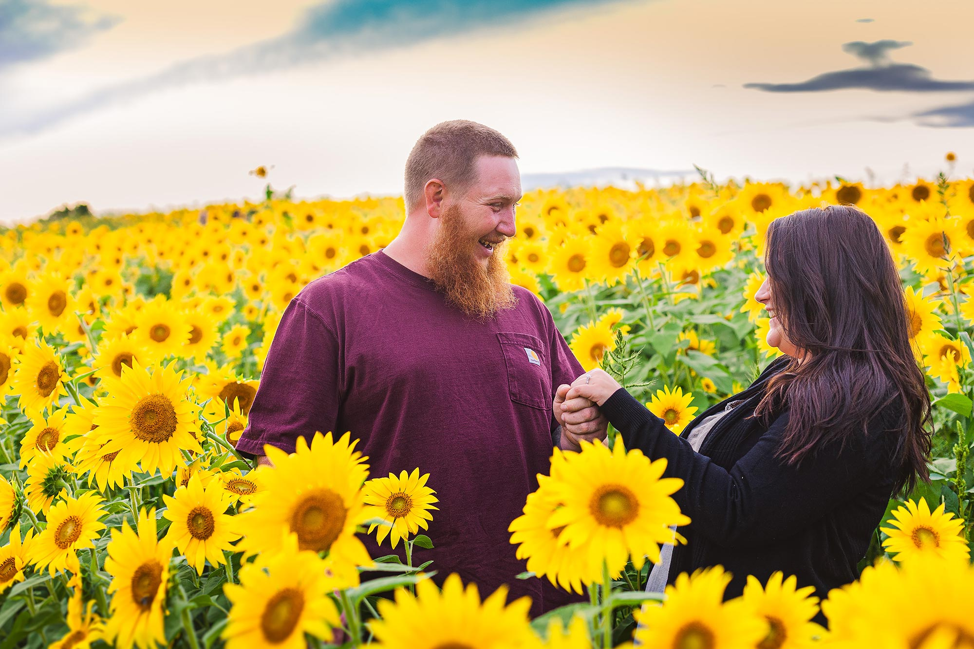 Colby Farm Sunflowers Portrait Photographer  | Stephen Grant Photography
