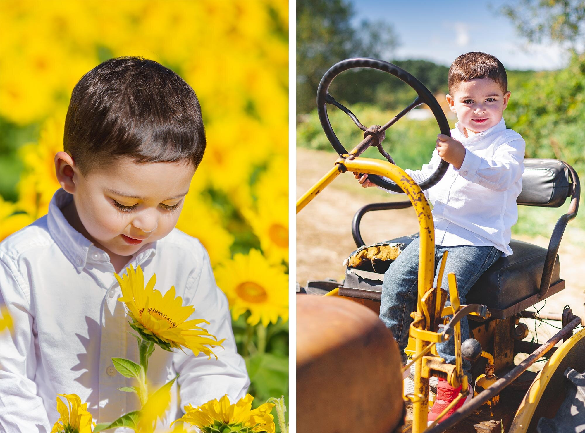 Colby Farm Sunflower Mini Session | Stephen Grant Photography