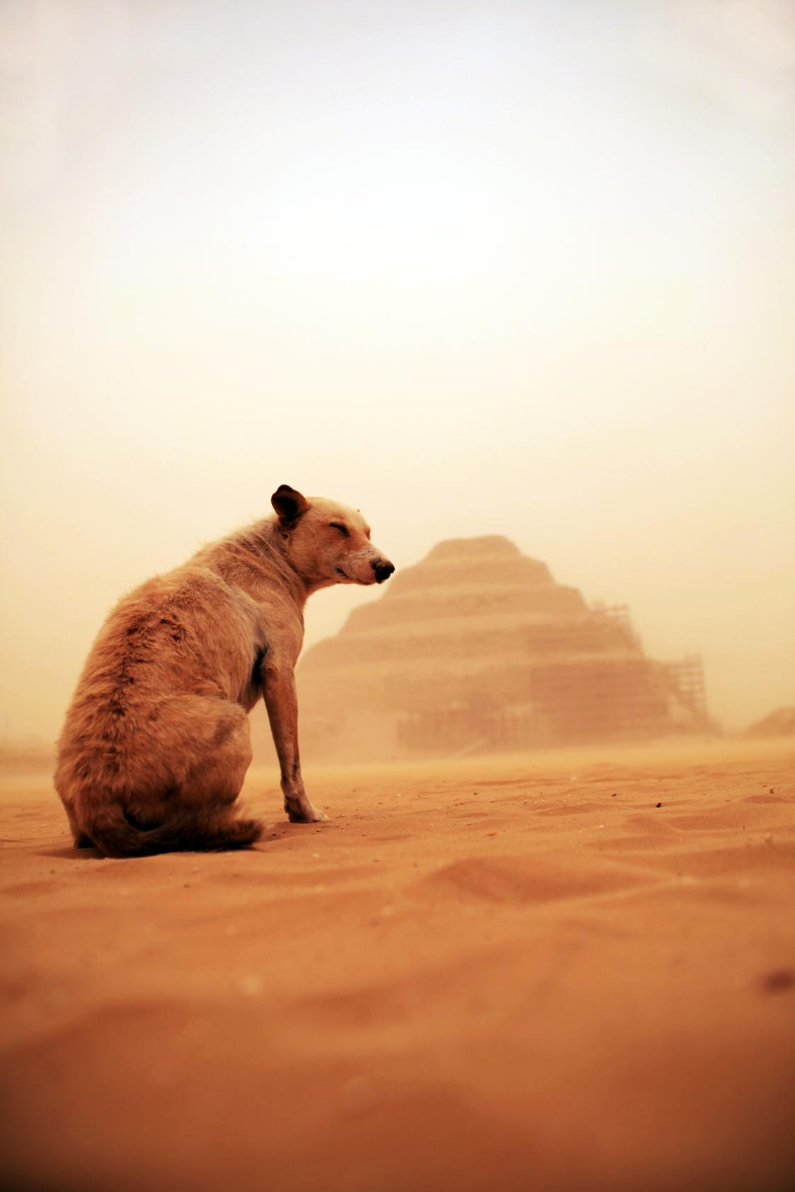 SJ Liew, Saqqara Dog 2B.jpg