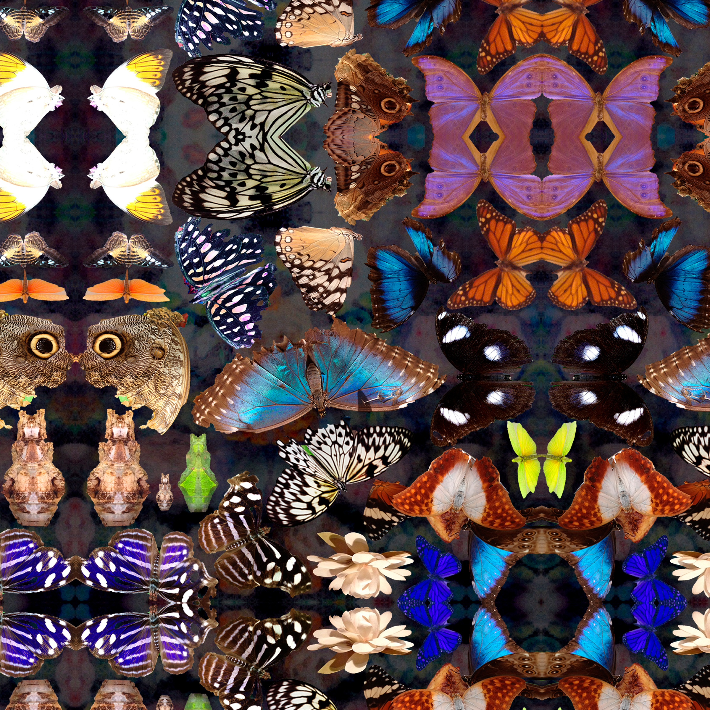 Our Butterfly in Dusk wallpaper