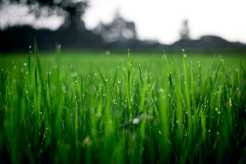 Turf Management Solutions