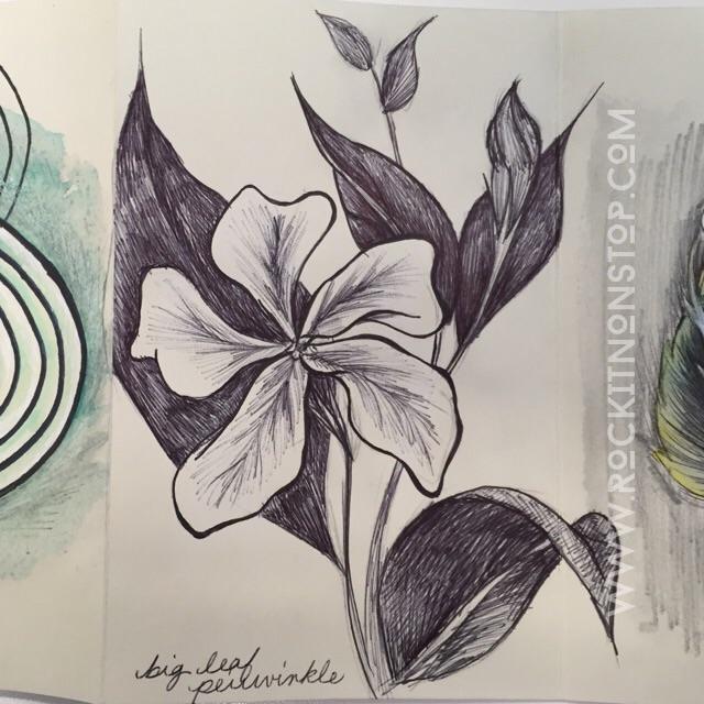 Periwinkle sketch