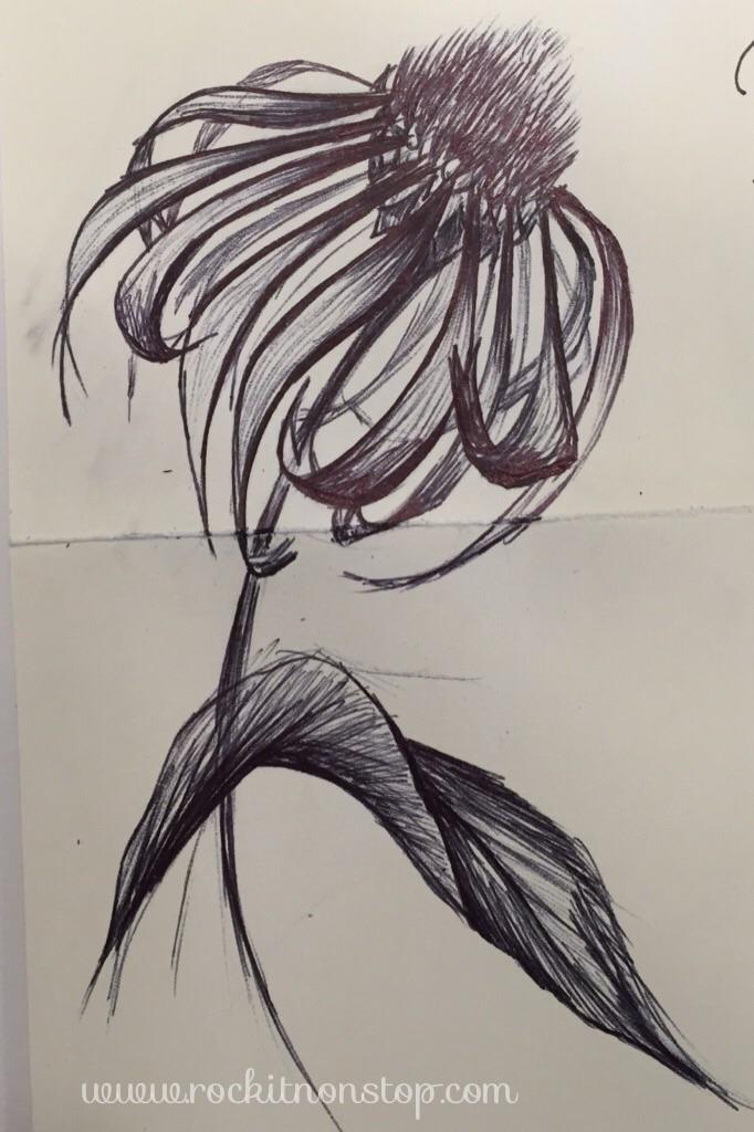Purple coneflower. day 85
