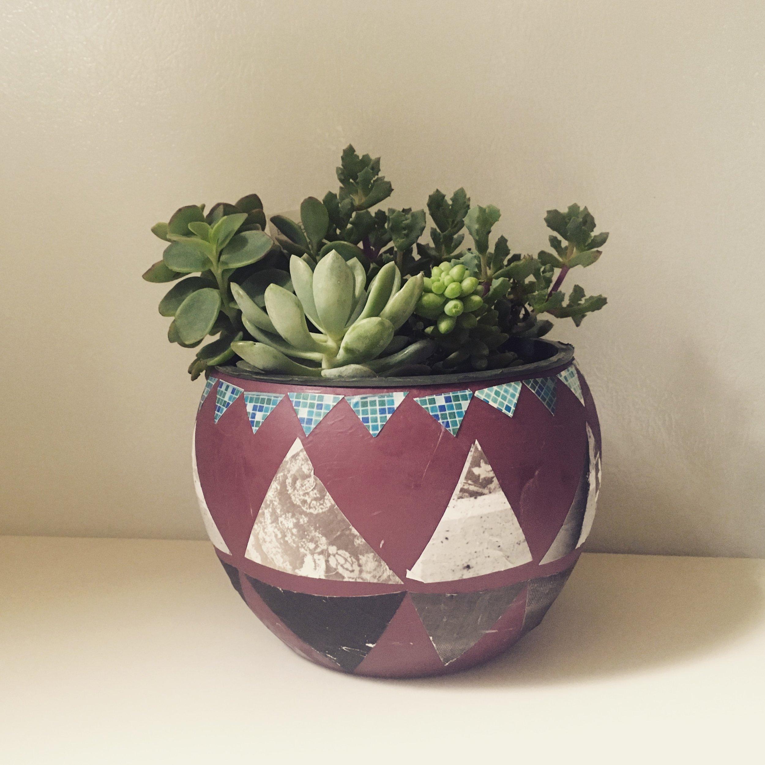 succulent pot.JPG