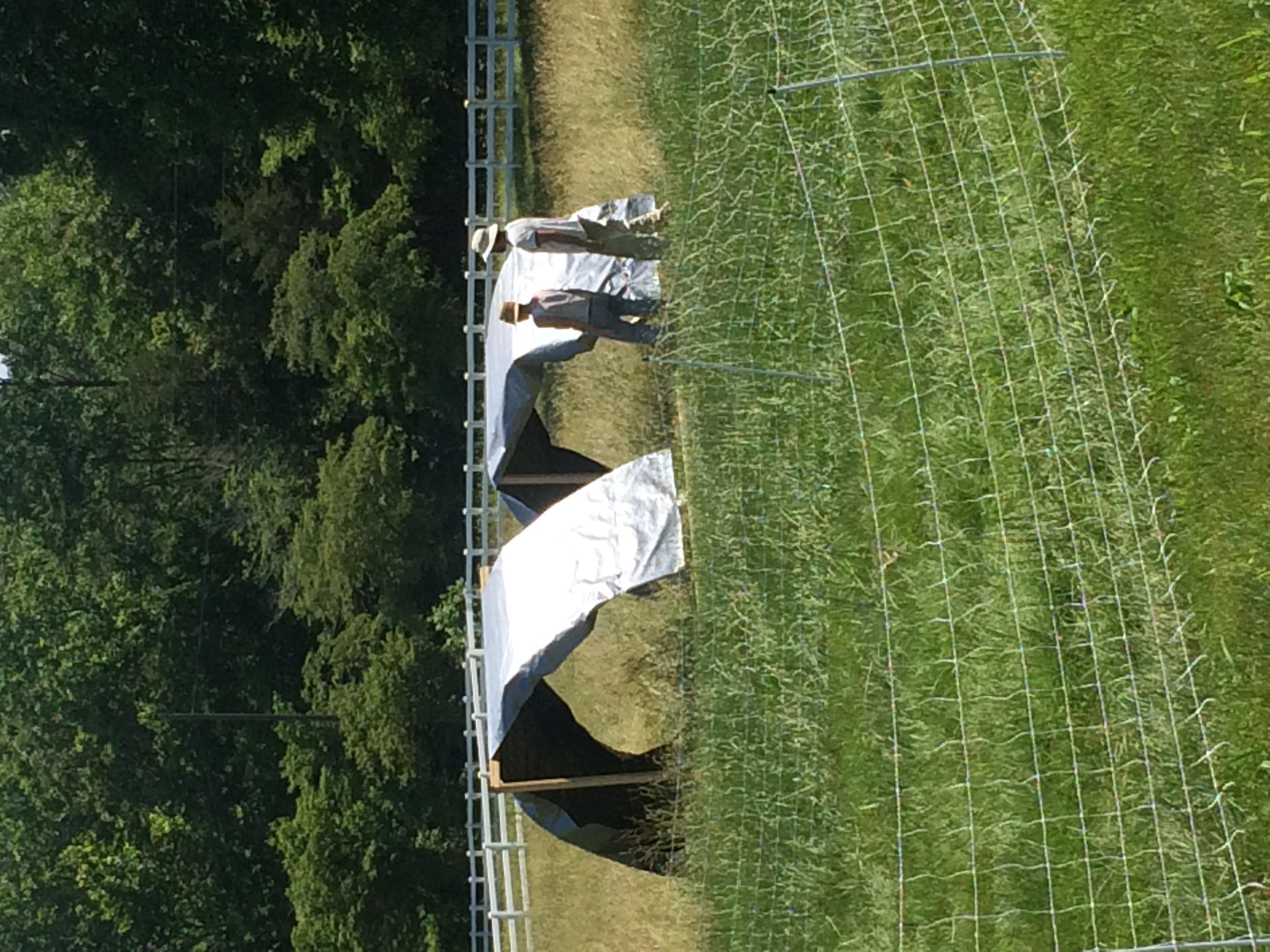 Marni and Jesse setting up shade shelters